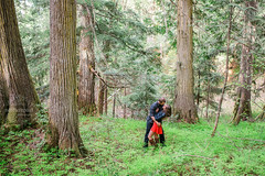 Ancient Forest Prince George BC Photo Session (Dan Stanyer (Northern Pixel)) Tags: green forest photography britishcolumbia pixel northern princegeorge engagementsession ancientforest princegeorgebc ancientforestprincegeorge northernpixelphotography