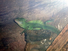 Here there be Dragons (Hydra5) Tags: ontariosciencecentre reptile lizard