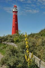 naar-Schier-de vuurtoren (Don Pedro de Carrion de los Condes !) Tags: donpedro d700 schiermonnikoog vuurtoren lighthouse phare duinen duinpad struweel noordertoren visserij