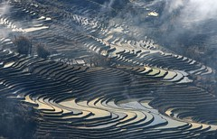 *Baida terraced rice fields* (albert.wirtz) Tags: albertwirtz nikon d810 china yunnan yuanyang bada baida ricefields terracedricefields winter reisterrassen paddypools nikkor70200f40vr