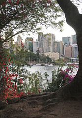 Brisbane City 002 (DMT@YLOR) Tags: brisbane queensland australia river buildings marina boats tree roots bougainvillea