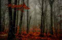 Forest mood! (pat.thom974) Tags: trees autumn red mood atmosphere fog forest