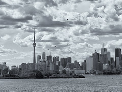 Skyline (StephenCaissiePhoto) Tags: cityscape skyline toronto water lakeontario sky clouds afternoon summer bw buildings urban detailed construction renewal dramatic landscape birds islands dichotomy sunny phaseone p30 captureone flight cranes skyscrapers