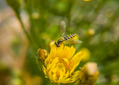 20160723_092813_2 (Roland Papp) Tags: nature macro top explore lg lgg4