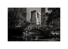 At The Pond In Central Park (Nico Geerlings) Tags: ngimages nicogeerlings nicogeerlingsphotography centralpark midtown manhattan nyc ny usa us newyorkcity pond bridge gapstowbridge fifthavenue centralparksouth leicammonochrom 35mm summicron