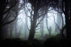 Sintra dreams (J C Mills Photography) Tags: trees mist portugal fog forest woodland landscape sintra da serra larch malveira sintracascaisnaturalpark