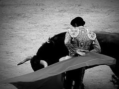 rebolera de Thomas Joubert (aficion2012) Tags: arles francia france paques 2016 corrida bull fight bulls toro toreau torero toreador matador rebolera revolera capote capa capear capeando remate pedrazasdeyeltes pedrazas
