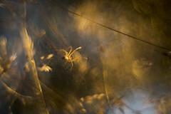 Aragnafobie 1 (look to see) Tags: spin spider aragnafobie lastlight beek bree belgium 2016