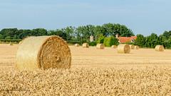 Across the field (dangerousdavecarper) Tags: hemblington straw hay bales field buildings norfolk countryside church