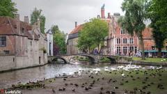 Bruges, la Belle 06 (Ld\/) Tags: brugge flandre flanders belgique belgium belgie bruges canaux bridge water old town city citytrip top