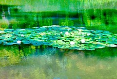 8/9 At the lily pond. #jjaproject (mkurashige 1) Tags: lilypond jjaproject