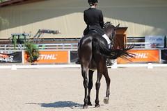 IMG_7449 (dreiwn) Tags: dressage dressur dressuur pferd reitturnier turnierreiten pferdesport horse horseback horseriding equestrian reitverein dressurprfung kandare doublebridle reiten pferde reitplatz ridingarena