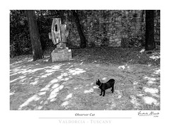 Observer Cat (Nicol Vedele) Tags: toscana horti leonini san quirico dorcia valdorcia bw blackwhite bn black canon 5d tuscany