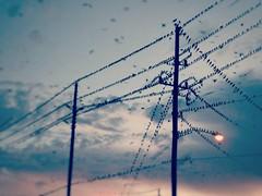 Birds Meeting (Adrian-Garcia) Tags: linesdawn dawn
