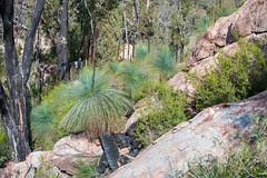 160924_Warrumbungles_5774.jpg (FranzVenhaus) Tags: trees creek countrybush plants cliffs australia mountains warrumbungles nsw water newsouthwales wilderness rocks aus