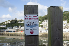 They are Vicious (new folder) Tags: southwestcoastpath looetotallandbay cornwall path walk looe looeharbour typography donotfeedtheseagulls prohibition theyarevicious seagull bird
