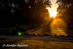 A morning like in the fairy world (Bernsteindrache7) Tags: summer park landscape outdoor light flora fauna sky heaven himmel sunrise sony alpha 100