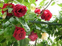 17079386865_baebbe6849_m (Lihy Arts) Tags: ☀ ღ ♫♫ ❤ ☀ღ♫♫❤ ♪ musicforthemind happiness bonnejournée ღϟツ ϟღツ amoureux amitié romantique romanticlove love romantic 情人节 バレンタイン การ์ดแสดงความรัก greetingcards cartesdevœux 有花 草 山 水 樹 美 讚 merci lihi tain m lyy25 יעל