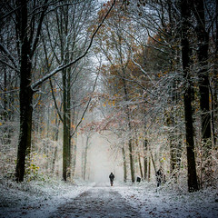 Lonely man (Samere Fahim Photography) Tags: trees light sky snow tree forest canon square landscape photography eos 350d couple belgium belgique lumire belgi iso ciel squareformat getty format neige minimalism paysage sameer samir 2008 mons minimalist squarecrop fort gettyimages myfaves  wallonie hainaut wallonia paturage fahim  samere colfontaine  mons2015 samerefahimphotography  samirfahim samerefahim