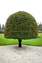Topiary Legs (Dave G Kelly) Tags: ireland plant tree geometric garden topiary legs foliage