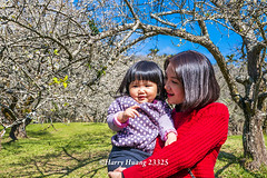 Harry_23325,,,,,,,,,,,,,,,,,,,,,,,Plum,Plum Tree,Tree,Fruit,Farm (HarryTaiwan) Tags: tree fruit nikon farm plum taiwan     plumtree  d800                       harryhuang  hgf78354ms35hinetnet adobergb