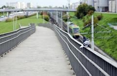 So much rail to s(h)it on (Przemek Turlej) Tags: life street city nikon pigeon pigeons tram poland line streetphoto f18 pst pozna poznan nikkor50mm fasttram turlejfoto przemysawturlej