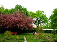 Gärtchen (radochla.wolfgang) Tags: gesehen bäume spaziergang gropiusstadt