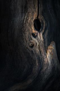 Benacre Wood 02/04/15