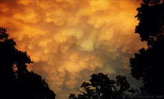 you see such clouds and you RUN! (lunaryuna) Tags: sky storm nature clouds amazing ngc lunaryuna cloudscape mammatusclouds ridersonthestorm orangeeggs alwayslookuptothesky