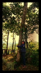 P1010990 (Mayan_princess) Tags: chiapas argovia finca resort caf coffee kaffee paraso paradise vegetacin vegetation verde green ro river spa relajacin relax forest selva orgnico autosostenible
