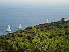 Sailing near the lighthouse. (panoskaralis) Tags: sailing sail sailboat lighthouse green aegeansea ships boats lesvosisland lesbos island mytilene greece hellas summer greeksummer summerholidays holidays bluesea