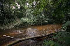 Guilherme.Gnipper-0159 (guilherme gnipper) Tags: picodaneblina yaripo yanomami expedio expedition cume montanha mountain wild rainforest amazonas amazonia amazon brazil indigenous indigena people