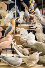 Hand-carved birds in an artist's studio in Pennsylvania. (Remsberg Photos) Tags: art artist bird carver studio wildlife wood pennsylvania lifelike realistic craft stahlstown usa