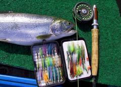 rainbow colours #2 (mysticislandphoto) Tags: flyfishing fishing fish rainbow trout vancouver island