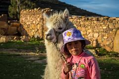 Llamita (rodrigopaulo) Tags: titicaca latinamerica southamerica bolivia copacabana backpacking isladelsol yumani mochilao