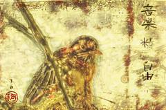 Music Spirit Freedom (Paul B0udreau) Tags: canada ontario paulboudreauphotography niagara d5100 nikon nikond5100 photoshopcc layer bird japanese nikkor70300mm photomatix tonemapping branch ukiyoe