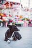 Dreaming Stray Dog (mripp) Tags: ich dog animal animals there tier hund stray strasenhund street strase urban city stadt istanbul turkey taksim square europe europa dreamy dream dreaming träumen traum tierpsychologie psychology tierschutz rights peta feelings feel gefühle fühlen