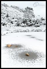 Frozen Tarn (darreng2011) Tags: trees winter sky white snow mountains cold tree ice cool rocks snowy freezing australia freeze tasmania chilly icy tas tassie tarn chill cradle cradlemountain cradlemt