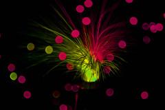 fibra (piririviana) Tags: cores pretty magic energia magia fibra otica