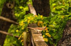 Happy Fence Friday! (Jims_photos) Tags: texas trees outdoor outside adobelightroom adobephotoshop shadows sunnyday daytime fencefriday jimallen lightroom nopeople nikon7100 bird femalecardinal