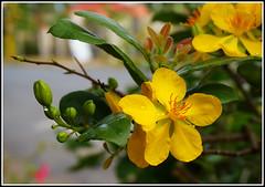 DSC00631 (Kun242) Tags: apricot blossom