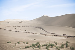 IMG_6799 (chungkwan) Tags: china chinese gansu province weather dry sands canon canonphotos travel world nature landmark landscape   dunhuang  crescent crescentlake  mingsha mingshamountain  camels silkroad