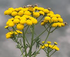 honing (emmapatsie) Tags: mechelen vaart bij