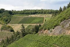 ckuchem-1458 (christine_kuchem) Tags: ahrtal anbau anbaugebiet eifel felsen rotweinwanderweg schiefer schieferfelsen sommer weinanbau weinberg weintraubenanbau weintrauben