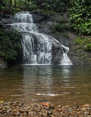 _NGE7762.jpg (Nico_GE) Tags: selvahumedatropical colombia sancipriano pacifico comunidadesafro valledelcauca co