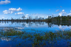 At the edge of a sunken world (TanzPanorama) Tags: blue trees sky lake nature water reflections landscape mirror explore sunken waterscape explored sonynex5n tanzpanorama