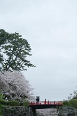 Crossing together (- yt -) Tags: bridge japan spring couple 桜 cherryblossom 日本 sakura odawara kanagawa 神奈川 春 小田原 小田原城 odawaracastle fujifilmxe1