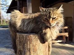 Sunbathing on a stump