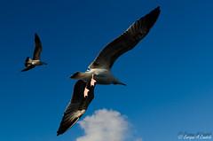 Y tocaremos el cielo... (hunter of moments) Tags: blue light sea sky naturaleza bird art luz nature azul mar fly nikon ave cielo alas pajaro volar d7000