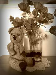Vintage Teddy (CalamityCam 2011) Tags: vintage teddy iplymouth